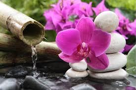 fleurs, eau, zen, ambiance, bien-être